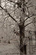 Ferrara d'inverno