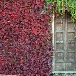 colognola porta autunno
