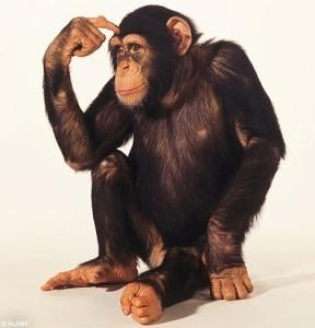 chimp-perplesso