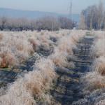 gazzolo inverno